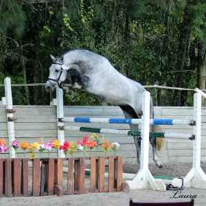 a-Aria Holsteiner Inspections 10-2-14-31